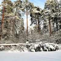 Зимняя картина :: Милешкин Владимир Алексеевич