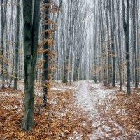 зима.грабовый лес. :: юрий иванов