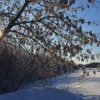 Зима за городом :: Вера Андреева