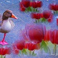 Ой! Чуть не наступил на тюльпанчик! Кто-то весну нарисовал! :) Фотосессия одного гусика (серия) :: Nina Yudicheva