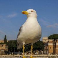 Bird :: Alena Kramarenko