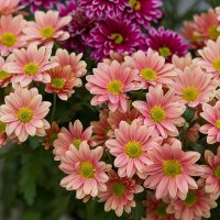 Цветы. :: Татьяна