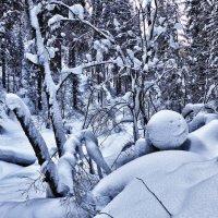 Лесной смайлик :: Светлана Игнатьева