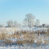 Зимушка зима :: Rassol Risk