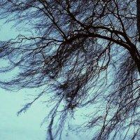 ветер за окном :: Леонид Натапов