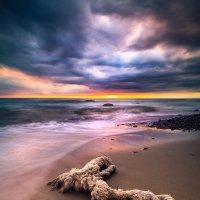 Seahorse :: Ruslan Bolgov