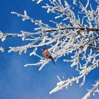 Снегирек :: НАТАЛИ natali-t8