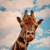 Взгляд свысока :: Alent Vink