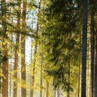 Дыхание весны :: Риф Сыртланов