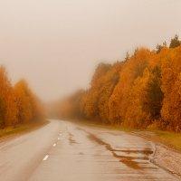 желтая дорога :: yur neliist