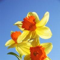 Смотрю на цветы и хочется весны...) :: *MIRA* **