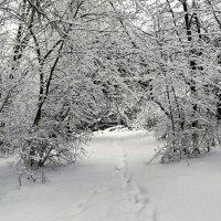 Снежной была зима :: Милешкин Владимир Алексеевич