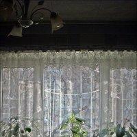 Февральское солнышко :: Нина Корешкова