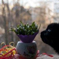 Чем же пахнет весна ... ? :: Ольга Винницкая (Olenka)