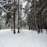 Лыжня :: Александр Подгорный