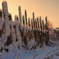 Зимним утром, у забора :: Николай Белавин