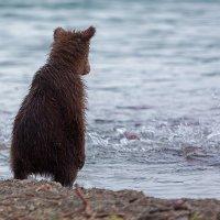 Как рыбки хочется! :: Денис Будьков