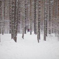 Прогулка в сосновом лесу :: Ольга