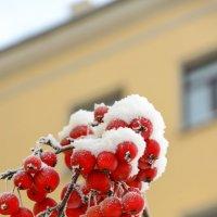 Во власти снега.... :: Ольга Козинец