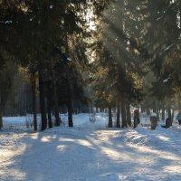 Чудесный зимний день :: Леонид Никитин