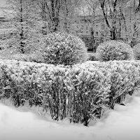 Чёрно-белая зима. 15.02.2016. :: Марк Васильев