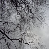 А небо мартовское :: Андрей Лукьянов