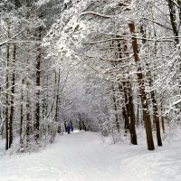 Про зимний спорт :: Милешкин Владимир Алексеевич