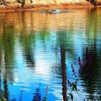 утка плещется в пруду....жарким летним днем :: Александра Полякова-Костова