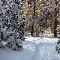 Январский вспоминая снег... :: Лесо-Вед (Баранов)