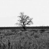 Одиночество.... :: владимир