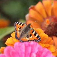 На цветке :: Татьяна Латышева