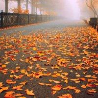 Осенняя дорожка :: Natalia Furina
