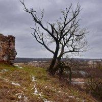 Развалины  старинной  Радзивиловской   сторожевой. башни :: Валера39 Василевский.