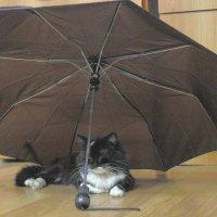 В такую погоду свои дома сидят... :: Юрий Гайворонский
