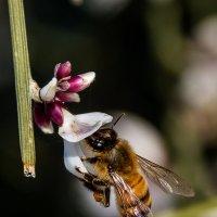 пчелка Мая :: Наталья