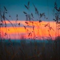 травушка-муравушка :: Photo Tasja