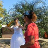 Невеста с попугаем :: Вера Щукина