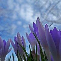 Февральская нежность... :: Galina Dzubina