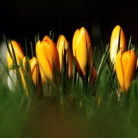 Весенний Десант :: Alexander Andronik