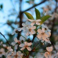 Май. Весна. :: Николай Масляев
