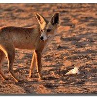 Степная лисица. :: Leonid Korenfeld