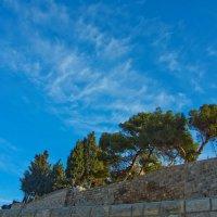 Иерусалим. Масличная гора. Вершина. :: Игорь Герман