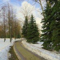 В зимнем парке! :: Ирина Олехнович