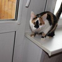 Кошка Марта :: Людмила Монахова