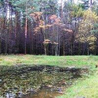 Пруд лесной :: Виктор Неклюдов