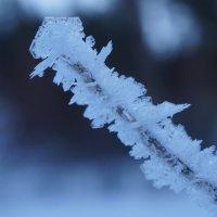 мороз :: Alexandr Staroverov