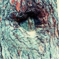 сердце в дереве или у дерева.... :: Александра Полякова-Костова