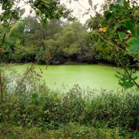 озеро зазеленело :: Александр Прокудин