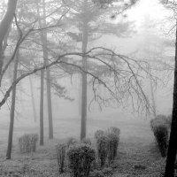 Парк  в  тумане.... :: Валерия  Полещикова