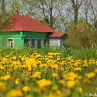 Трава у дома :: Сергей
